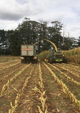 NR harvesting maize Mar blog