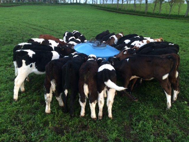 NR calf feeding
