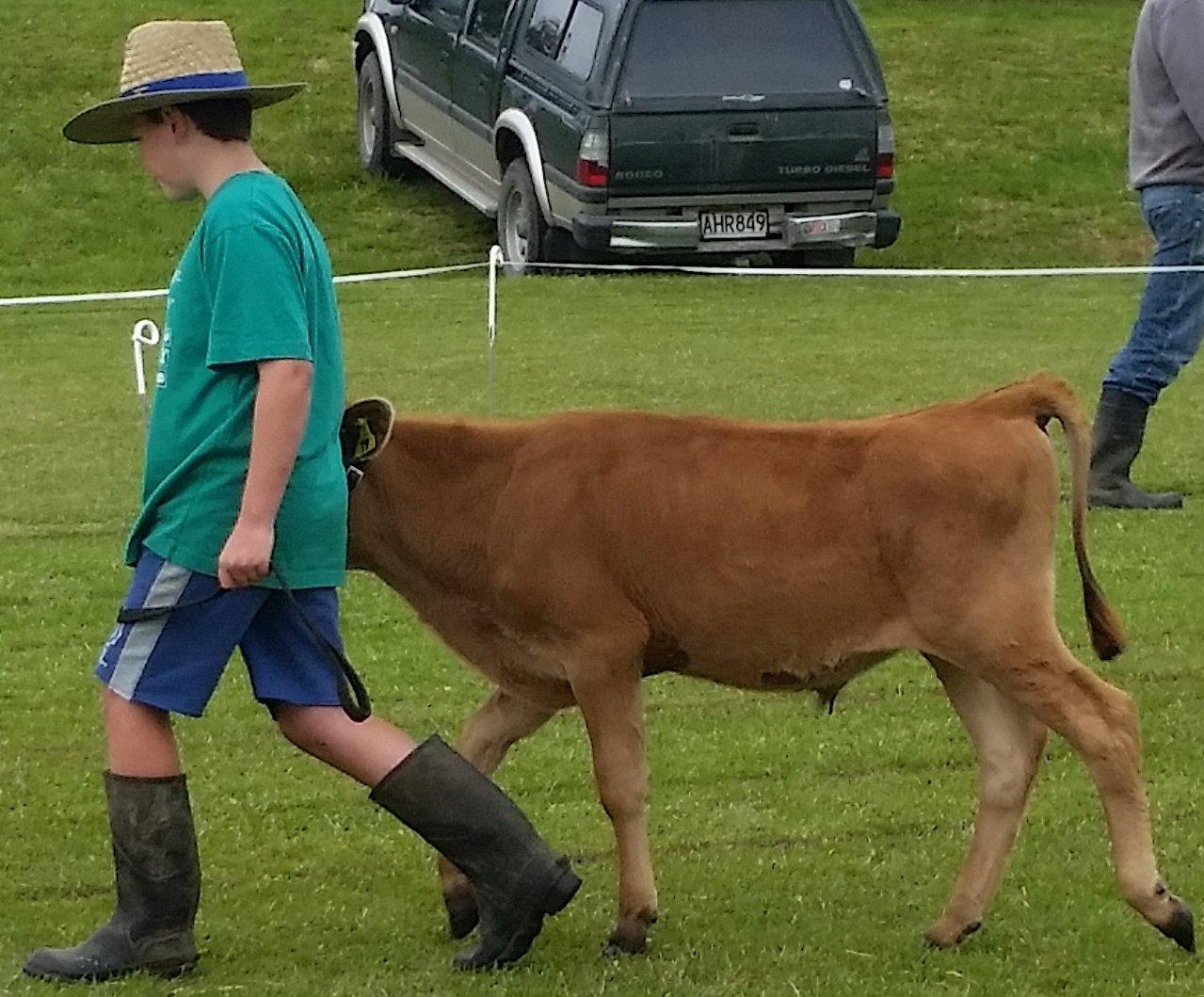 TG calf club