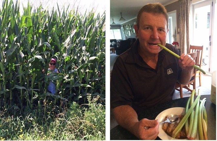 NR maize + rhubarb Feb blog