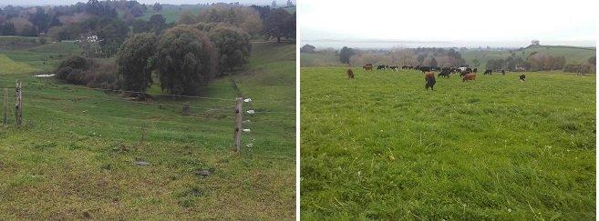 JVG fence heifers combined