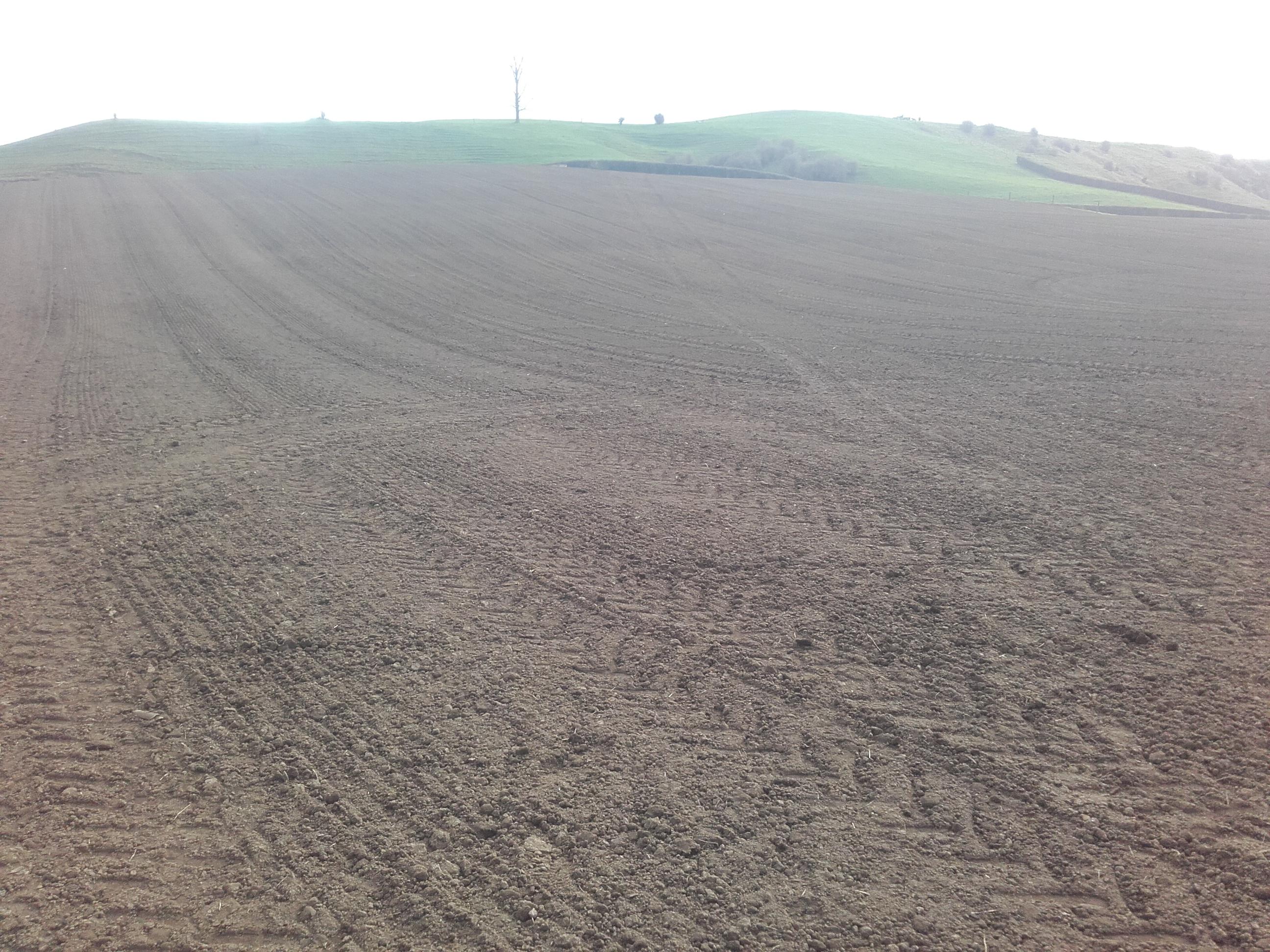 JVG fodder beet cultivated paddock