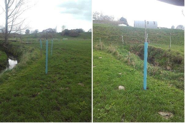 JVG poplar poles4