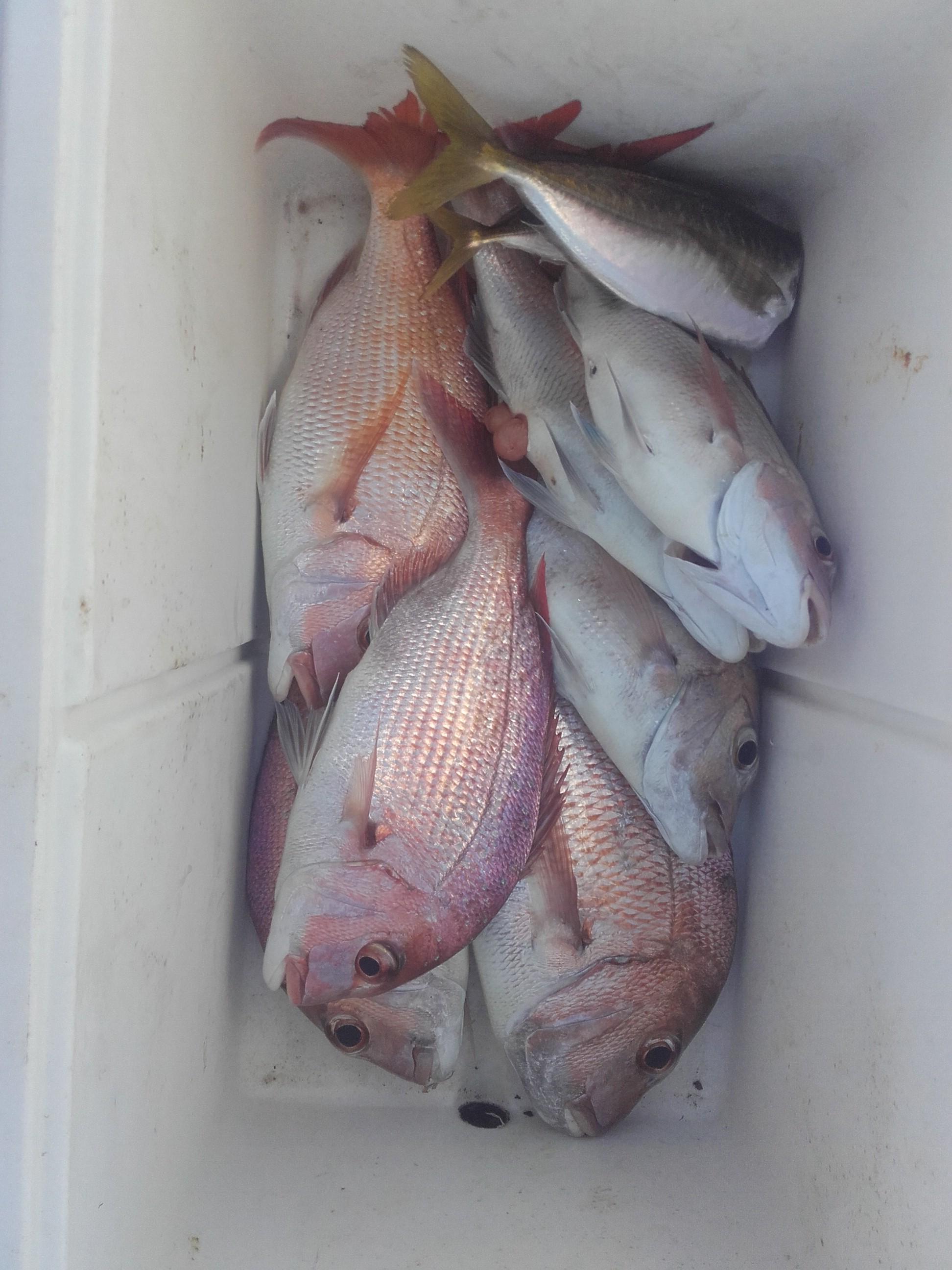 JVG fish