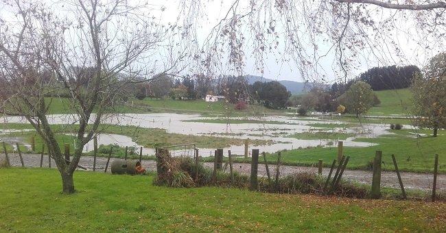 JVG rain crop