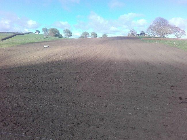 JVG fodder beet sowing.jpg